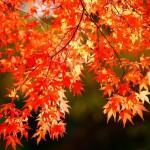 紅葉に旅行にダイエット!この時期こそおすすめしたい「秋ゴルフ」の楽しみ方