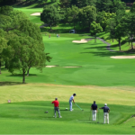 これだけは覚えよう!パークゴルフでの打ち方と基本ルール